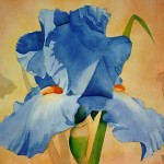 blue-iris-by-mary-cooper-smith